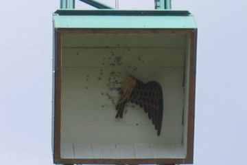 2005_schuetzenfest_montag_056